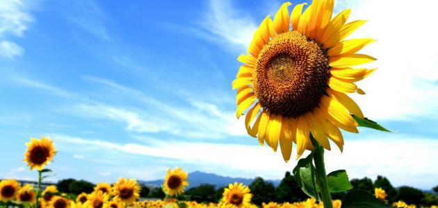 أزهار الحياة بدل أزهار الموت